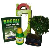Bonsai malá